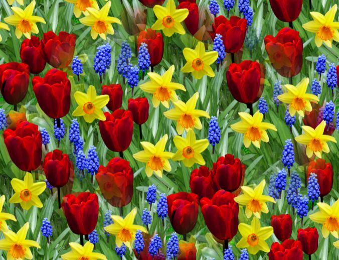 spring-flowers-background-2